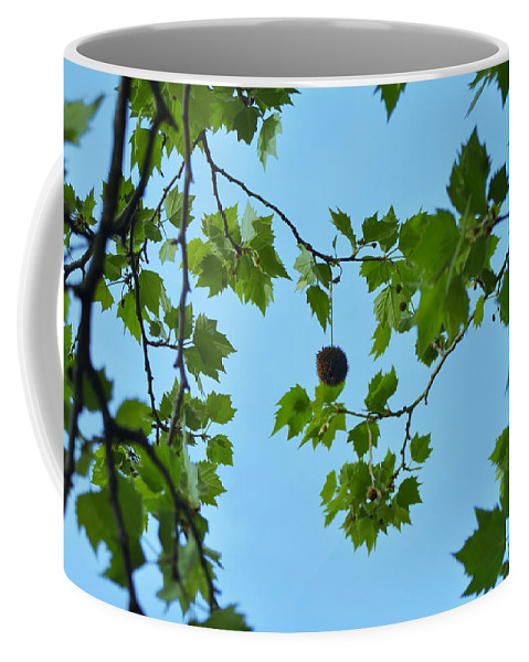 Chestnut Coffee Mug featuring the photograph Chestnut by Bill Cannon
