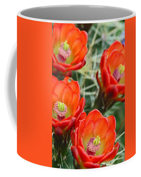 Cactus Coffee Mug featuring the photograph Claret-cup Cactus 2am-28736 by Andrew McInnes