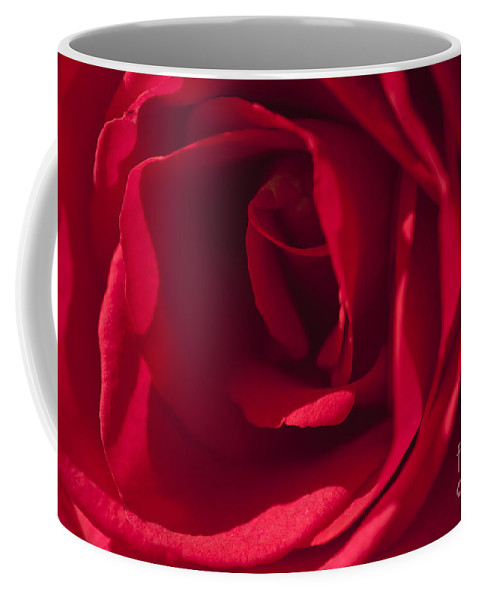 Red Rose Coffee Mug featuring the photograph Classic Rose by Sandra Bronstein