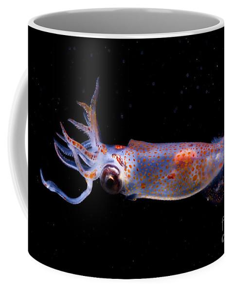 Gonatus Onyx Coffee Mug featuring the photograph Clawed Armhook Squid by Dante Fenolio