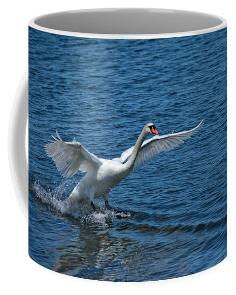 Swan Coffee Mug featuring the photograph Clean Landing by Karol Livote