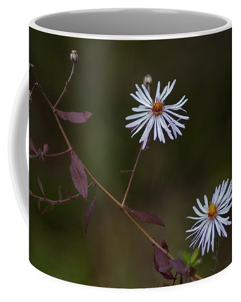 Aster Coffee Mug featuring the photograph Climbing Aster by Joseph Yarbrough