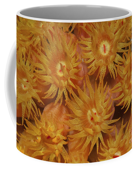 Eggs Coffee Mug featuring the photograph Close-up Of Orange Cup Coral by Karen Doody