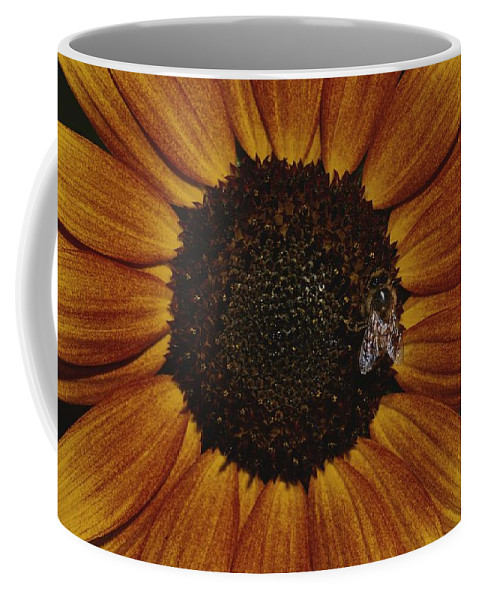 Australia Coffee Mug featuring the photograph Close View Of A Bee On A Sunflower by Jason Edwards