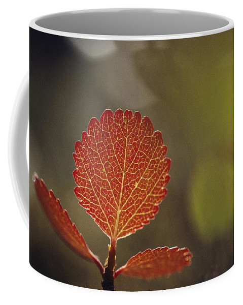 North America Coffee Mug featuring the photograph Close View Of A Leaf by George F. Mobley