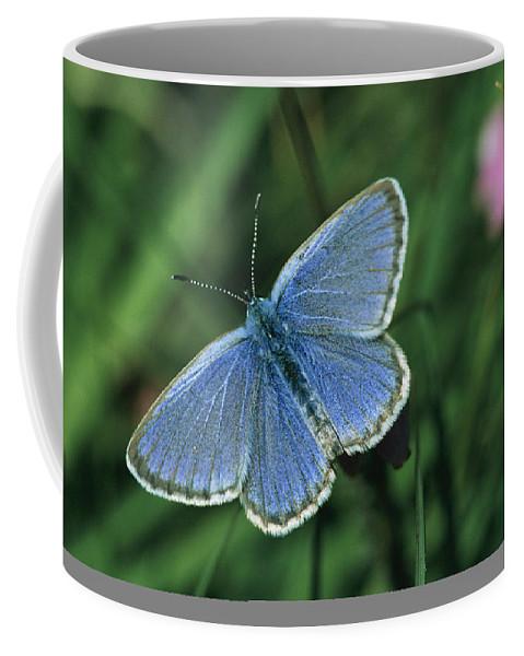 Europe Coffee Mug featuring the photograph Close View Of A Maculinea Alcon by Darlyne A. Murawski