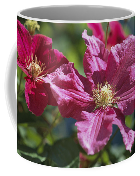 Plants Coffee Mug featuring the photograph Close View Of Clematis Flowers by Darlyne A. Murawski