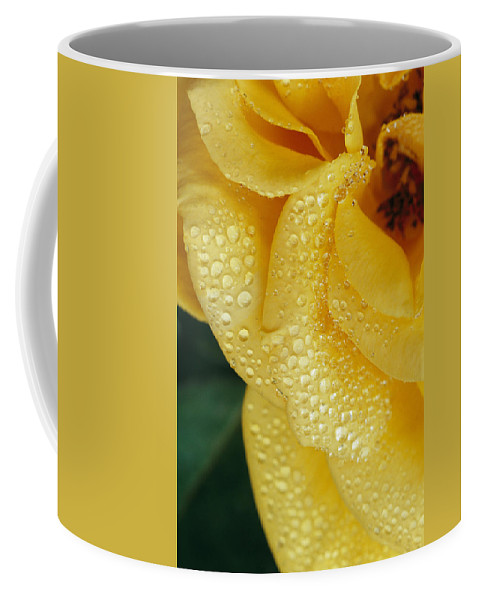 Water Coffee Mug featuring the photograph Close View Of Dew On Olympic Gold Rose by Jason Edwards