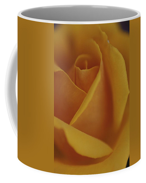Australia Coffee Mug featuring the photograph Close View Of Olympic Gold Rose by Jason Edwards