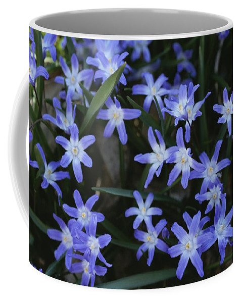 Plants Coffee Mug featuring the photograph Close View Of Spring Flowers by Darlyne A. Murawski