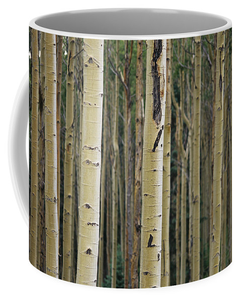 Plants Coffee Mug featuring the photograph Close View Of Tree Trunks In A Stand by Raul Touzon