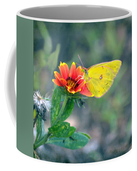 Butterfly Coffee Mug featuring the photograph Clouded Sulphur Butterfly Square by Sandi OReilly