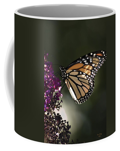 Butterfly Coffee Mug featuring the photograph Cloyd's Debut by Trish Tritz