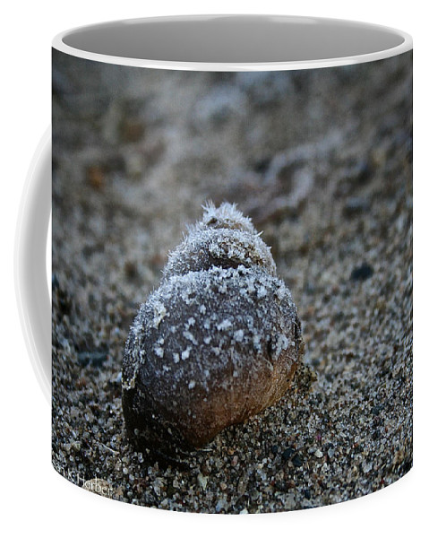 Outdoors Coffee Mug featuring the photograph Cold Shell by Susan Herber