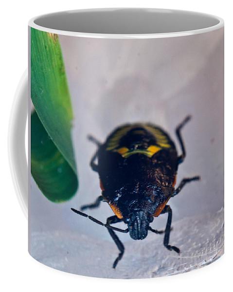 Hemiptera Coffee Mug featuring the photograph Colorful Hemiptera Nymph 1 by Douglas Barnett