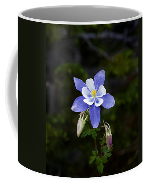 Wildflowers Coffee Mug featuring the photograph Columbine 3 by Rich Franco