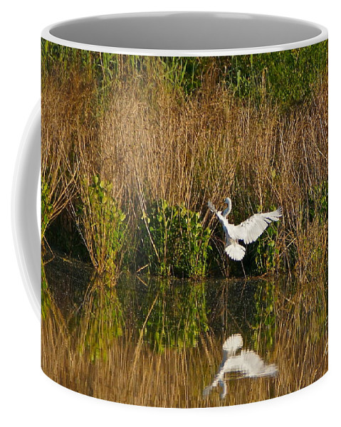 Egret Flying Coffee Mug featuring the photograph Comings And Goings by Byron Varvarigos