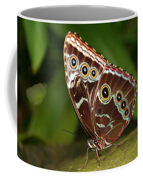 Morpho Peleides Coffee Mug featuring the photograph Common Blue Morpho by Laurel Talabere