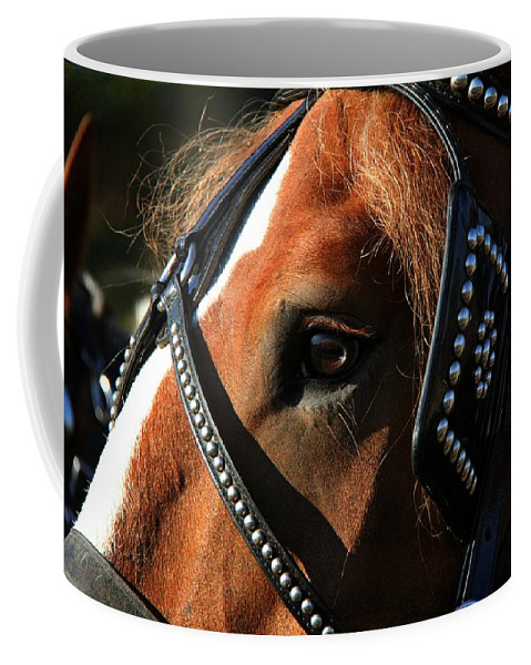 Animal Coffee Mug featuring the photograph Concentration by Davandra Cribbie