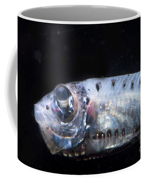 Valenciennellus Tripunctulatus Coffee Mug featuring the photograph Constellationfish by Dante Fenolio