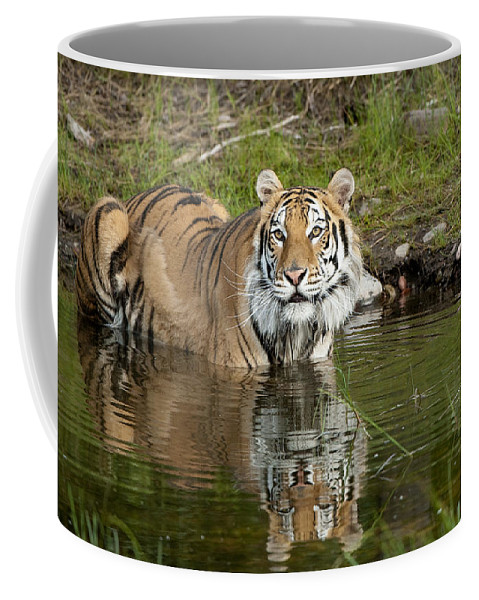 Sandra Bronstein Coffee Mug featuring the photograph Cooling Off by Sandra Bronstein