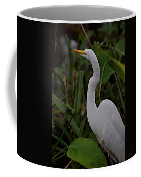 Audobon Corkscrew Swamp Sanctuary Coffee Mug featuring the photograph Corkscrew by Joseph Yarbrough