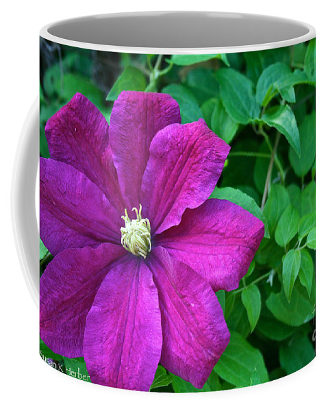 Flower Coffee Mug featuring the photograph Corner Clematis by Susan Herber