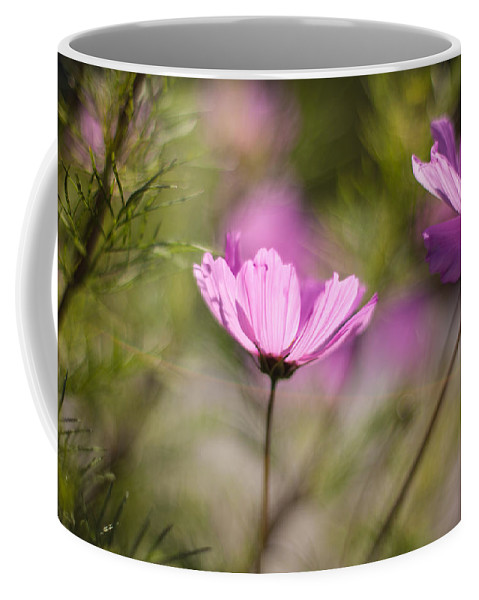Flower Coffee Mug featuring the photograph Cosmos Light by Mike Reid