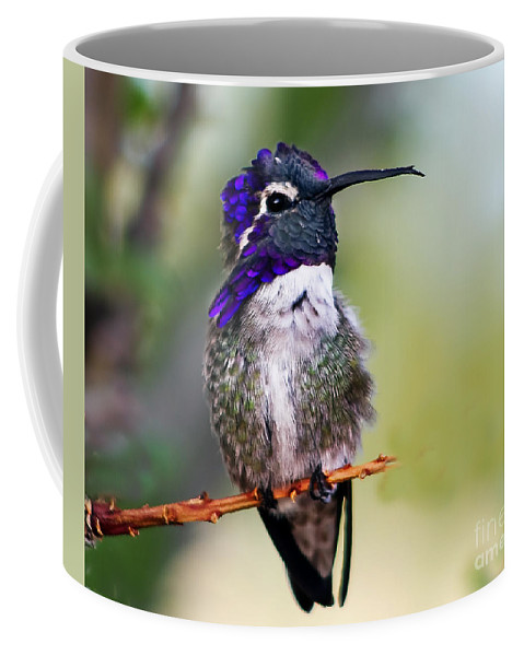 Birds Coffee Mug featuring the photograph Costa's Resting by Robert Bales