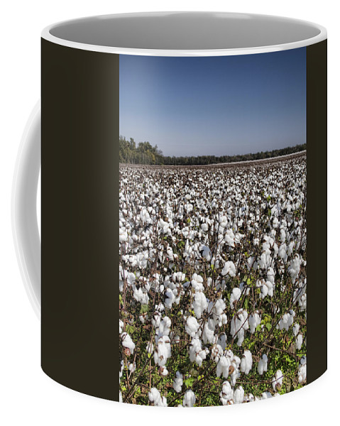 Cotton Coffee Mug featuring the photograph Cotton In Limestone County by Kathy Clark