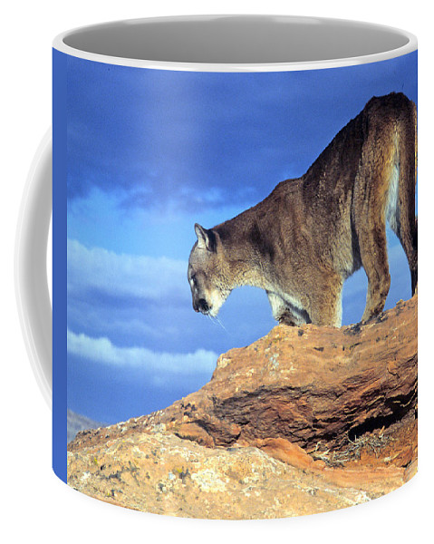 Cougar Coffee Mug featuring the photograph Cougar In The Sky by Larry Allan