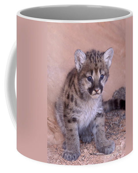 Bronstein Coffee Mug featuring the photograph Cougar Kitten by Sandra Bronstein
