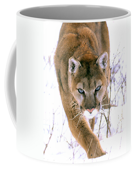 Cougar Coffee Mug featuring the photograph Cougar Stalks Through Snow by Larry Allan