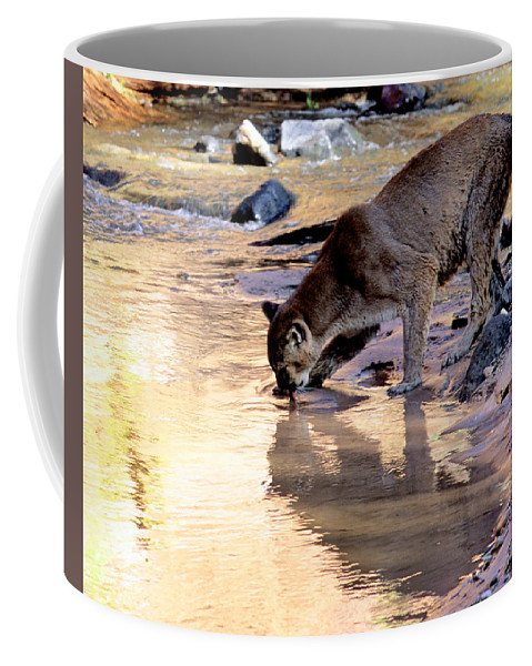 Cougar Coffee Mug featuring the photograph Cougar Stops For A Drink by Larry Allan