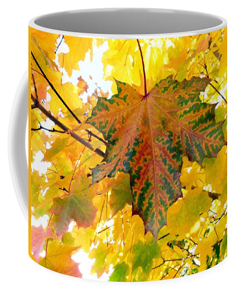 Autumn Coffee Mug featuring the photograph Country Color 21 by Will Borden