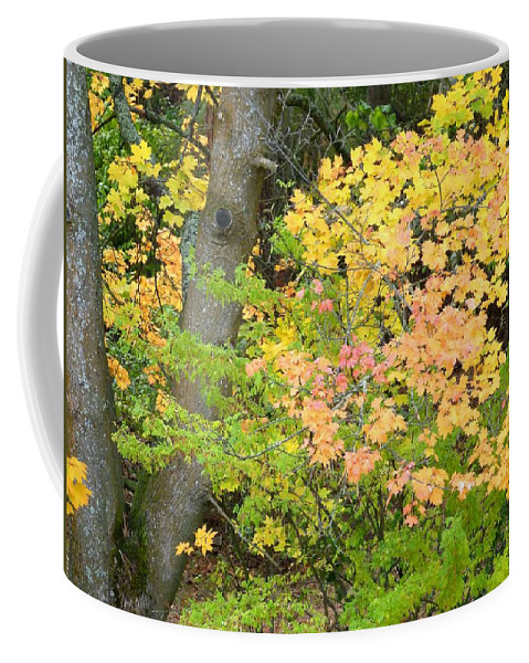 Autumn Coffee Mug featuring the photograph Country Color 23 by Will Borden