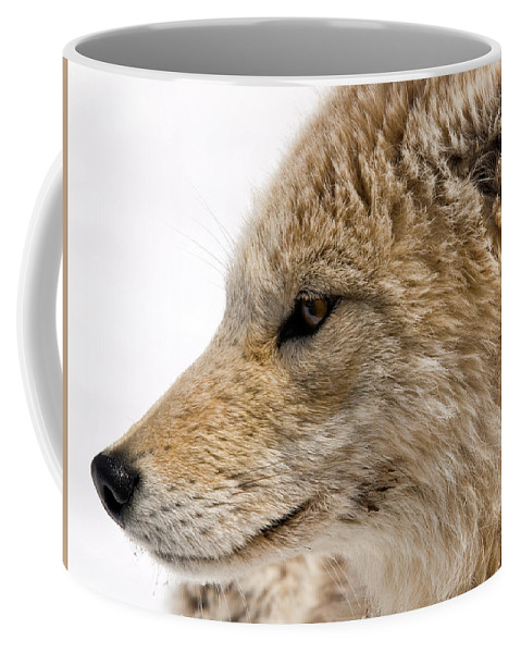 Coyote Coffee Mug featuring the photograph Coyote by Steve Stuller