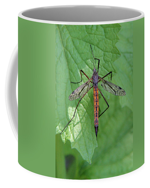 Crane Fly Coffee Mug featuring the photograph Crane Fly by Doris Potter