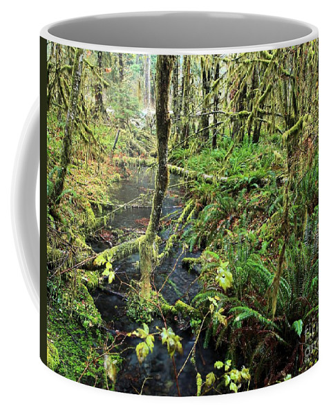 Hoh Rainforest Coffee Mug featuring the photograph Creek In The Rain Forest by Adam Jewell