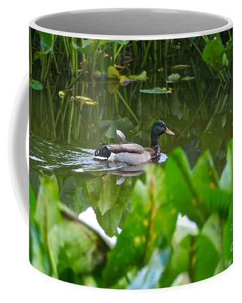 Mallard Coffee Mug featuring the photograph Cruising by Byron Varvarigos