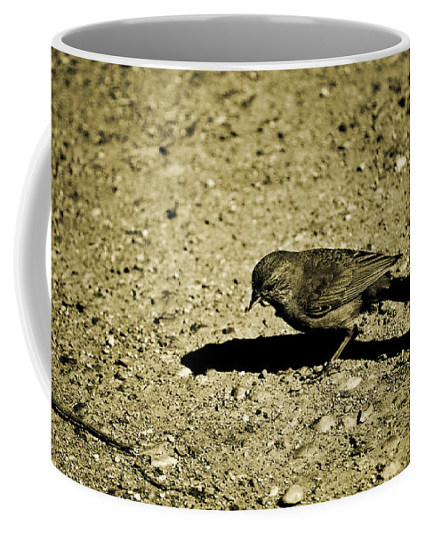 Sparrow Coffee Mug featuring the photograph Crumbless by Diego Re
