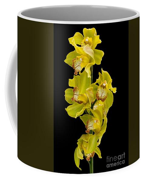 Ann Garrett Coffee Mug featuring the photograph Cymbidium - Boat Orchid by Ann Garrett