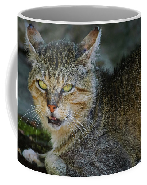 Cat Coffee Mug featuring the photograph Da Cat by Diego Re