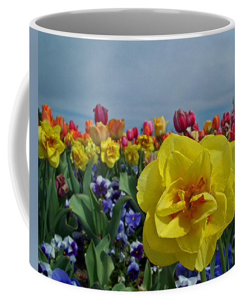 Daffodil Coffee Mug featuring the photograph Daffodil Up Front by Tikvah's Hope
