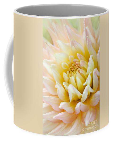 Dahlia Coffee Mug featuring the photograph Dahlia Flower 03 by Nailia Schwarz