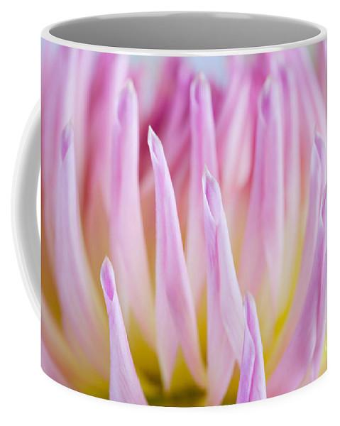 Dahlia Coffee Mug featuring the photograph Dahlia Flower 12 by Nailia Schwarz