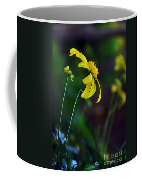 Photography Coffee Mug featuring the photograph Daisy Profile by Kaye Menner