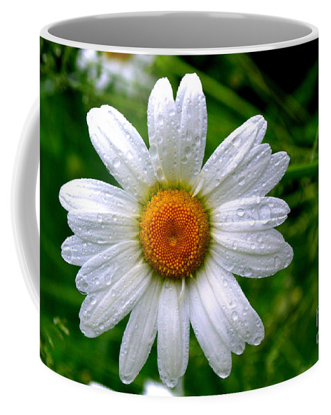 White Coffee Mug featuring the photograph Daisy Shower by Kevin Fortier