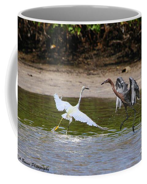 Reddish Egret Coffee Mug featuring the photograph Dancing Egrets by Barbara Bowen