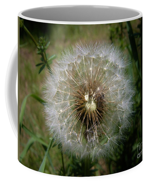 Dandelion Coffee Mug featuring the photograph Dandelion Going To Seed by Sherman Perry